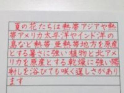 ペン字やボールペンで、横書きで書くことが多いかた・苦手なかたへ【ペン字6回コース・8月のお手本/よこがき】